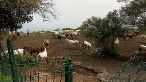 Adalardan Hatay'a gönderilen 99 atın kaybolduğu iddiasına çifte soruşturma