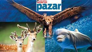 Ne yaptı bu hayvanlar bize!