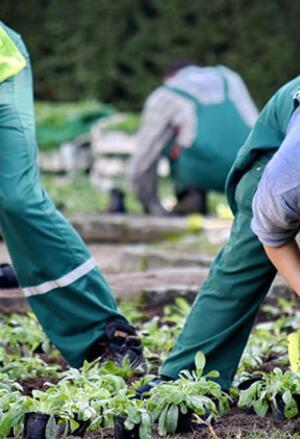 Çalışkan, gönüllü, acemi çiftçiler aranıyor!