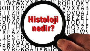 Histoloji nedir? Histolog ne demek? Histoloji bilimi neler ile ilgilenir