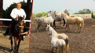100 atın kayboluşunda flaş gelişme
