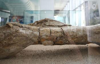 Kayseri'de at, zürafa ve gergedan fosilleri bulundu