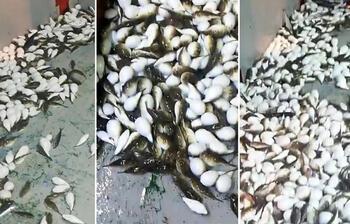 Antalya'daki korkutan görüntünün ardından o balıkçı konuştu!