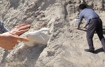 Veteriner Kayseri'de buldu! Tam 7.5 milyon yıllık...