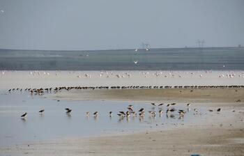 Koronavirüs önlemleri göçmen kuşlara yaradı