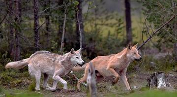 Dünyanın dört bir yanından göz kamaştırıcı hayvanlar