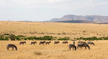 Afrikanın en etkileyici 10 safari noktası