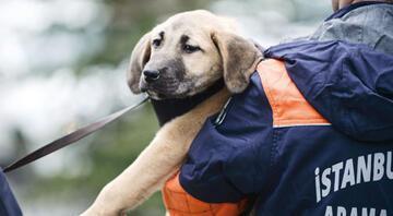 Bir mahzun köpek, bir grup pırıl pırıl genç ve onlarca güzel insanın umut veren hikâyesi...