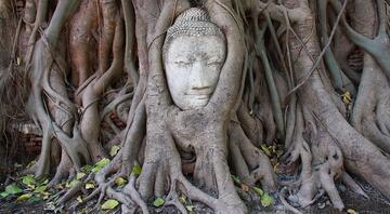 Kimsenin kesemediği  ölümsüzlük ağacı