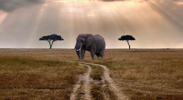 Farklı bir deneyim isteyenlere: Masai Mara