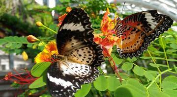 Dünyanın en ilginç kelebek müzeleri