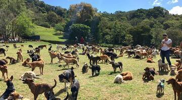 1000'e yakın köpeğin yaşadığı yeryüzü cenneti
