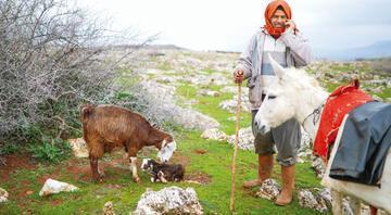 Sarı hattın çobanları