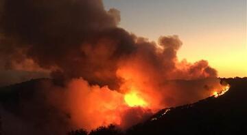 İzmirde bu yılın en büyük yangını