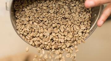 Son dönemde popülerliği arttı Yeşil kahvenin faydaları neler