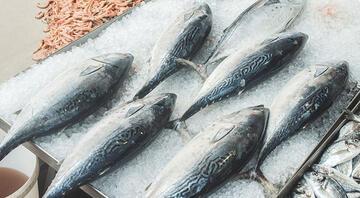 Bu ay hangi balıklar yenir Eylül ayında hangi balıklar lezzetli olur