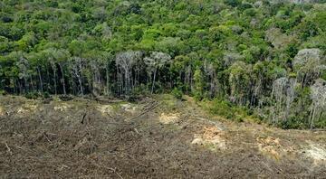 Amazon yağmur ormanlarındaki kayıp