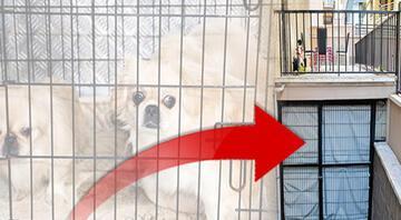 Sessiz çığlık Ankara'da köpeklerin ses tellerinin kesilmesiyle ilgili tüyler ürperten ayrıntılar