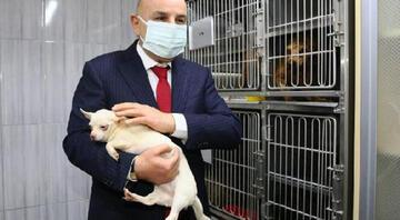 Ankarada el konulan 77 köpeği sahiplenmek için rekor başvuru: 5 günde 3 bin 298 kişi...