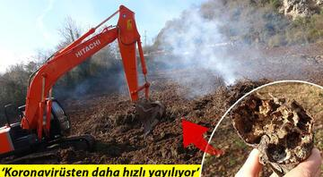 Trabzonda büyük tehlike Önce söküp, sonra yakıyorlar...
