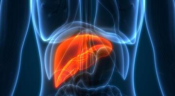 Karaciğer yağlanması neden olur, belirtileri nelerdir Karaciğer yağlanmasına ne iyi gelir