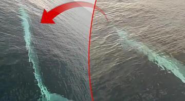 Adanada oluklu balina heyecanı İlk kez görüldü