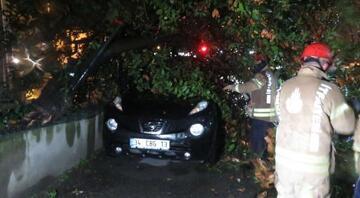 Kadıköyde ağaç aracın üzerine devrildi