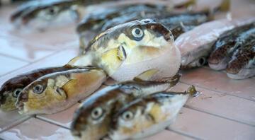 Balon balığı tehlikesi balık fiyatlarını da etkiledi