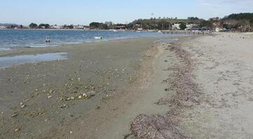 Çanakkalede deniz suyu 20 metre kadar çekildi