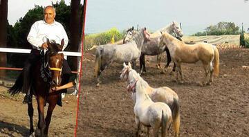 100 atın sır kayboluşunda flaş gelişme