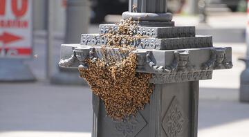Vatandaşları tedirgin eden görüntü Arılar istila etti...