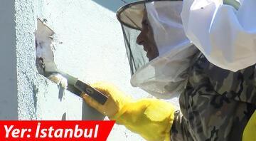 İstanbulda okul görevlileri arılardan şüphelenince bulundu Tam 50 kilogram...