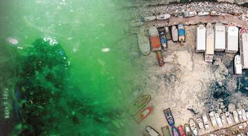 Deniz salyası kâbusu Marmara can çekişiyor