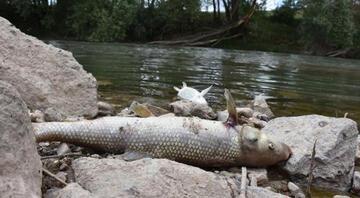 Kızılırmakta balık ölümleri Harekete geçildi