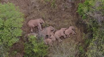 Tüm ülke bu fillere kilitlendi 15 aydır yoldalar, mışıl mışıl uyuyorlar, fatura ise ağır...