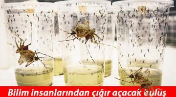 Bilimin büyük başarısı... Öldürücü hastalığı sivrisinekle yendiler