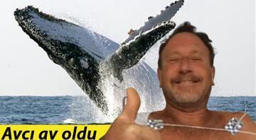 ABDde ilginç olay: Dev balinanın ağzına alıp tükürdüğü ıstakoz avcısı yaralandı