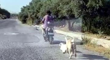 Mersinde dehşete düşüren görüntü Köpeği böyle sürükledi