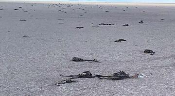 Tuz Gölü toplu flamingo ölümleriyle gündemde -  Tuz gölündeki Flamingolar neden öldü