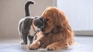 Evcil hayvan bakımında hayatınızı kolaylaştıracak 6 öneri