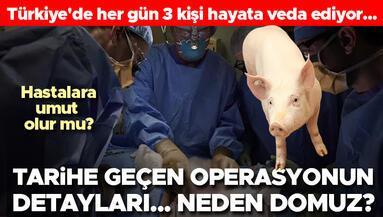 Domuzdan insana organ nakli Türkiye için de umut oldu...