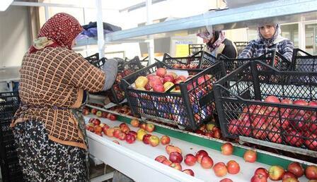 '50 bin ton elma depoda kaldı'