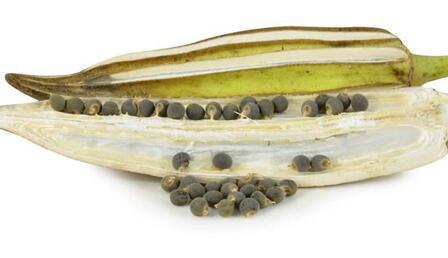 Bamya tohumunun 10 faydası