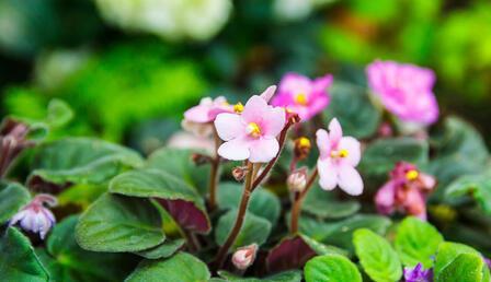 Evinize renk katacak birbirinden güzel 5 bitki
