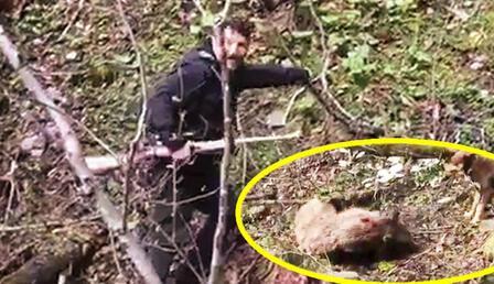 Vicdansızlar! Artvin'de yavru ayıyı vurdular: Tepki çeken olayda son dakika gelişmesi