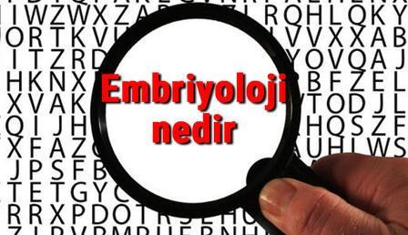 Embriyoloji nedir ve neyi inceler? Embriyoloji bilimi hakkında kısaca bilgiler