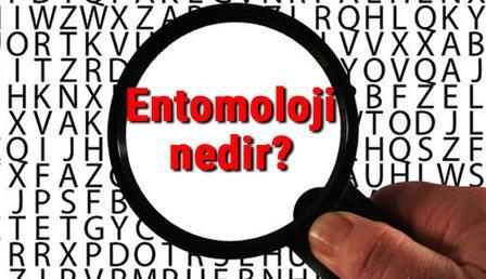 Entomoloji nedir ve neyi inceler? Entomoloji (Böcek Bilimi) hakkında kısaca bilgiler