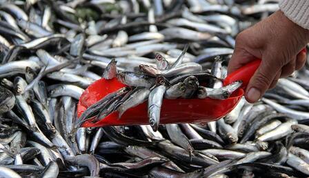 Muğla'dan dünyanın dört bir yanına balık ihracatı