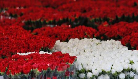 Denizli'den Hollanda ve Rusya'ya karanfil ihracatı