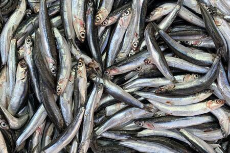 Denizlerimizin prensi hamsiyle yapabileceğiniz nefis yemek tarifleri